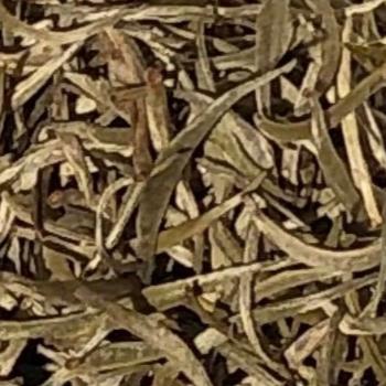 Silver Needle valkoinen luomutee